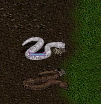 serpent_nest